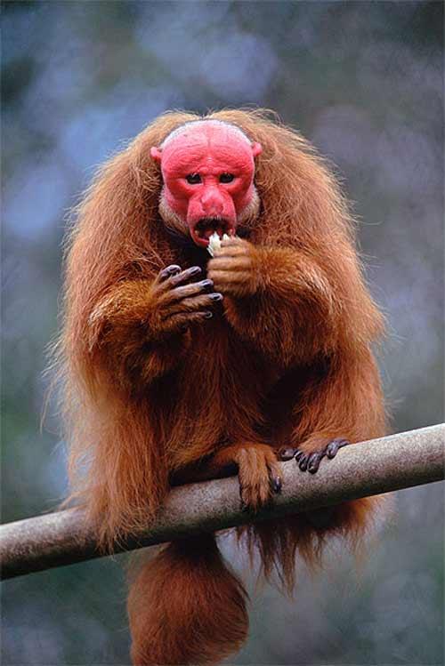 Những loài vật đáng sợ nhất thế giới (P1) - 3