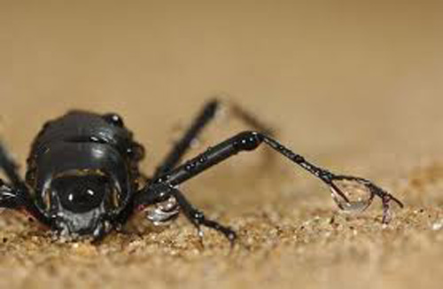 Những loài vật đáng sợ nhất thế giới (P1) - 6