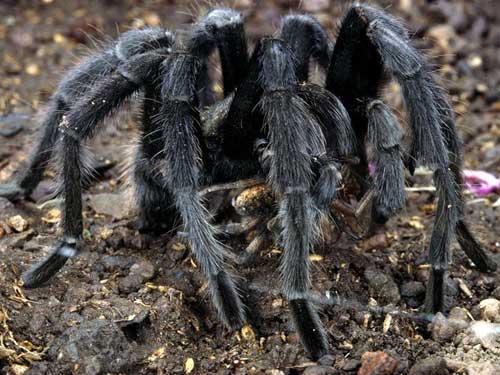 Những loài vật đáng sợ nhất thế giới (P2) - 4