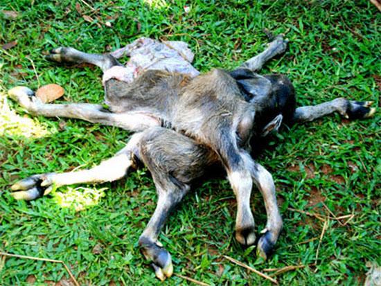 Những con vật kỳ lạ nhất Việt Nam - 6