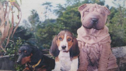 Lên đời đại gia từ... nuôi chó - 3