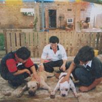 Lên đời đại gia từ... nuôi chó