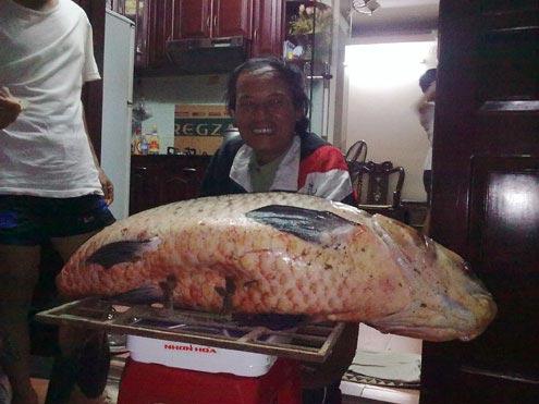 Bắt được cá trắm đen siêu khủng nặng 56kg - 1