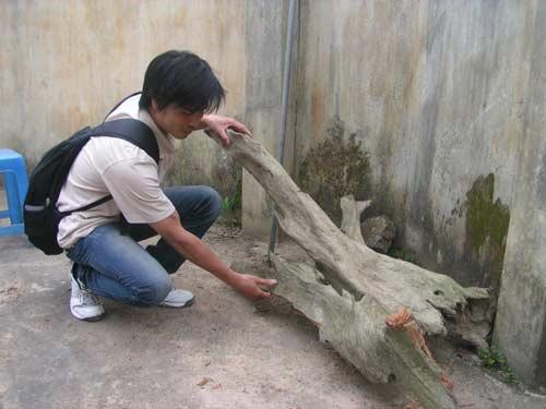 """Ly kì chuyện """"săn"""" gỗ Ngọc Am... ướp xác - 2"""