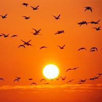 Video THẾ GIỚI ĐỘNG VẬT: Cuộc sống muôn loài