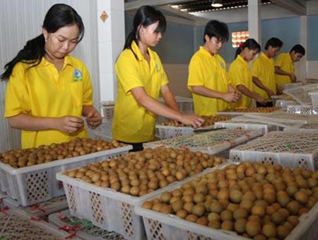 Cơ hội lớn cho xuất khẩu trái cây Việt Nam - 1