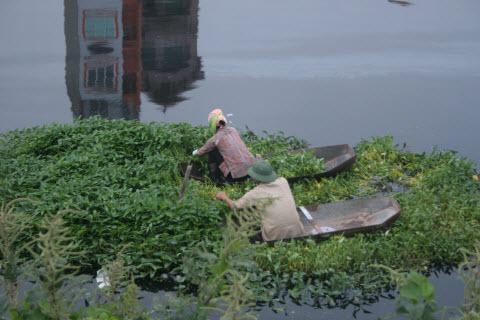 Kinh hoàng thả rau trên dòng sông chết, Tin tức trong ngày, rau ban, rau muong ban, nuoc o nhiem, song Nhue, song o nhiem, song chet