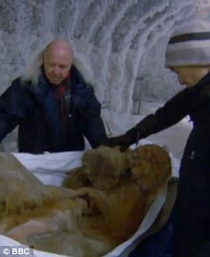 Phát hiện xác ướp voi ma mút 10.000 tuổi - 1