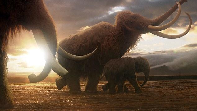 Phát hiện xác ướp voi ma mút 10.000 tuổi - 9