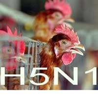 Dịch cúm A/ H5N1 bùng phát tại Trung Quốc