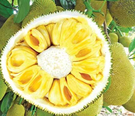 8 lợi ích sức khỏe tuyệt vời từ trái mít - 1