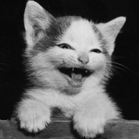 Tại sao mèo chạy cụp đuôi?