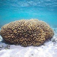 Quyến rũ mê hồn san hô biển Đông