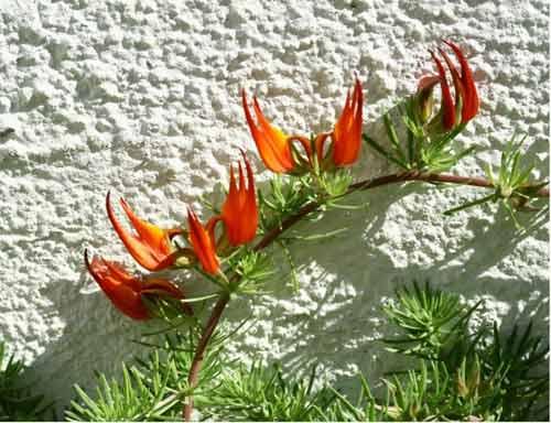 10 loài hoa hiếm nhất trên thế giới - 3