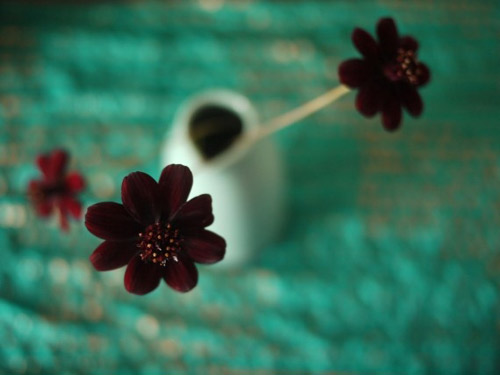 10 loài hoa hiếm nhất trên thế giới - 4