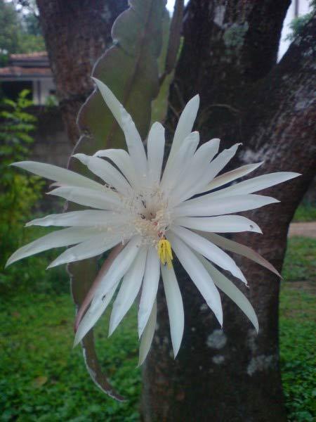10 loài hoa hiếm nhất trên thế giới - 6
