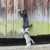 Video hài: 10 khoảnh khắc của mèo yêu