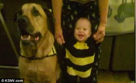 Mỹ: Em bé bị chó cắn chết đúng ngày sinh nhật - 1