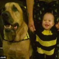 Mỹ: Em bé bị chó cắn chết đúng ngày sinh nhật