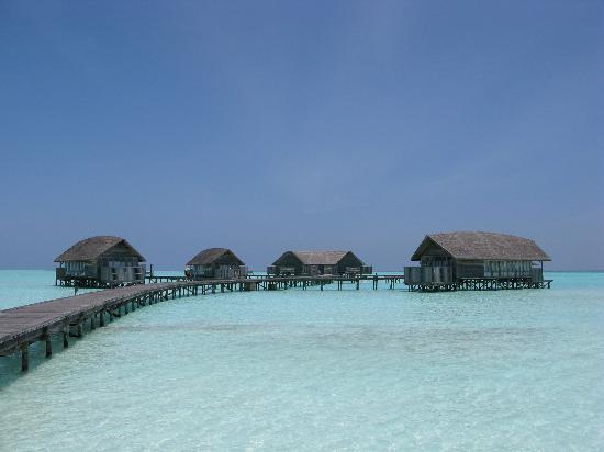 Đảo Cocoa - Maldives, bồng lai tiên đảo - 3