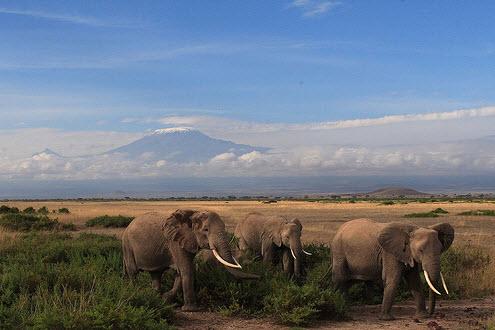 Kilimanjaro, người khổng lồ của Châu Phi - 3