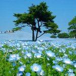 Du lịch - Đam mê vẻ đẹp cánh đồng hoa rực rỡ