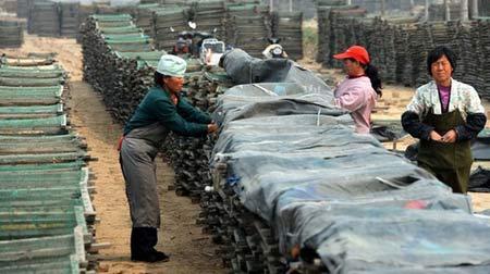 Thuốc, thịt nhiễm chất cấm ở Trung Quốc - 2