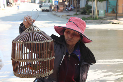 """Trai Mông xách chim """"xịn"""" đi bán dạo - 2"""