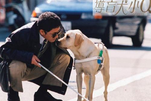 Cảm động vì những chú chó trung thành - 6