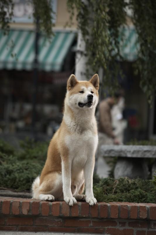 Cảm động vì những chú chó trung thành - 4