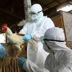 Sức khỏe đời sống - Biến thể H5N1 lây sang người qua hô hấp?