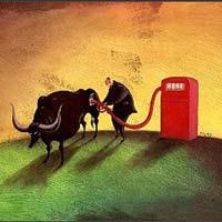 Sáng 8/5: Cổ phiếu dầu khí tiếp tục nổi sóng