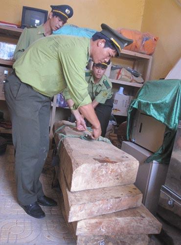 Thu giữ 5 phách gỗ sưa giá 10 tỉ đồng - 1