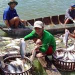 Thị trường - Tiêu dùng - Lỗ nặng, người nuôi cá tra bán ao bỏ nghề