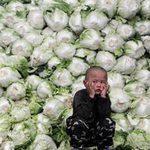 Tin tức trong ngày - TQ: Phun chất ướp xác, rau cải 3 năm vẫn tươi
