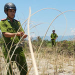 Tin tức trong ngày - Điều tra khí lạ làm hàng loạt cây chết khô