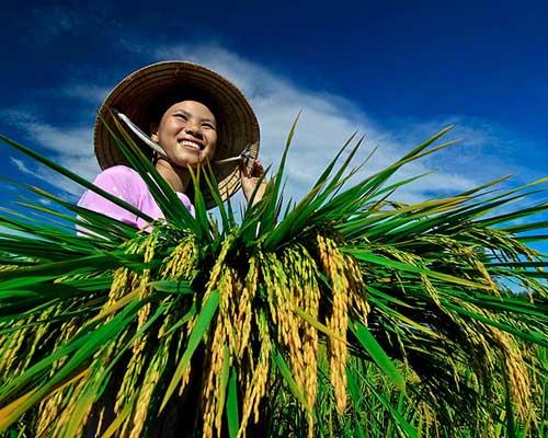 Những khoảnh khắc tuyệt đẹp của Việt Nam trên báo Nga - 9
