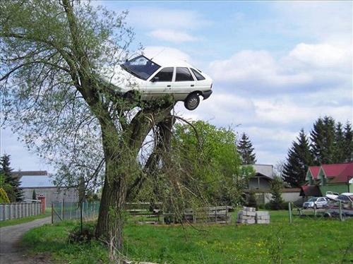 Xe ô tô bị treo trên cây liễu - 1