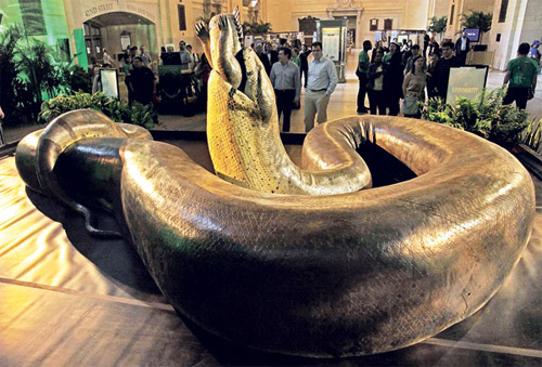 Loài rắn nặng hơn 1 tấn - 5