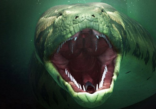 Loài rắn nặng hơn 1 tấn - 6