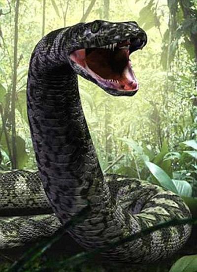 Loài rắn nặng hơn 1 tấn - 7