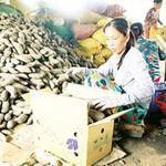 Thị trường - Tiêu dùng - Thương lái Trung Quốc ép giá khoai