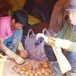 Thị trường - Tiêu dùng - Hành tây, khoai tây TQ chứa chất ướp xác?