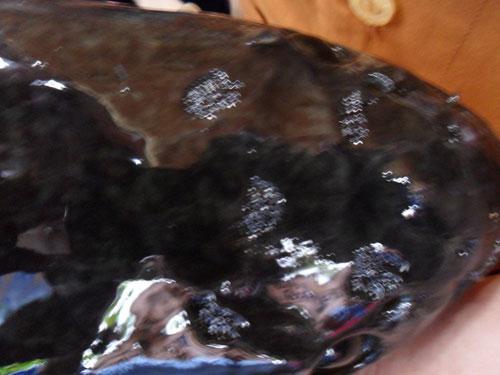Đổ xô xem cá lóc nổi chữ trên đầu - 2