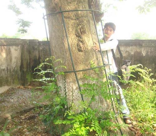Những tuyệt chiêu bảo vệ cây sưa quý - 2