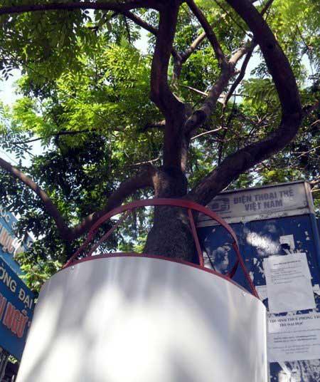 Những tuyệt chiêu bảo vệ cây sưa quý - 4
