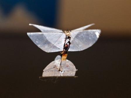 """Israel phát triển """"bướm"""" do thám - 1"""