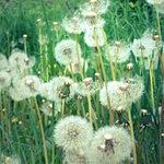 Du lịch - Vẻ đẹp lạ kỳ của những bông hoa dại