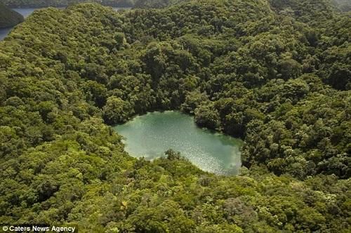 Hồ sứa nước mặn tuyệt đẹp ở Palau - 1