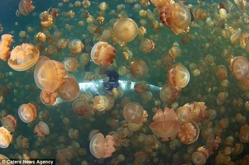 Hồ sứa nước mặn tuyệt đẹp ở Palau - 7